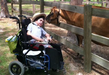Young boy in wheelchair with cow.
